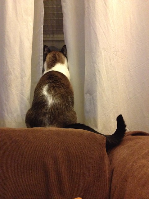 watching kitty tv #project365