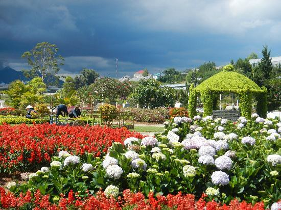 6 Da Lat National Flower Park3