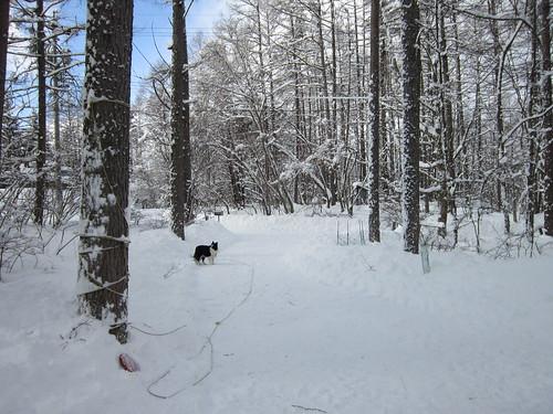 アプローチの雪かきはほぼ完成 by Poran111