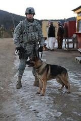 street dog(0.0), animal(1.0), dog(1.0), pet(1.0), mammal(1.0), police dog(1.0),