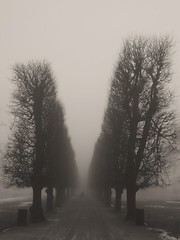Winter's fog