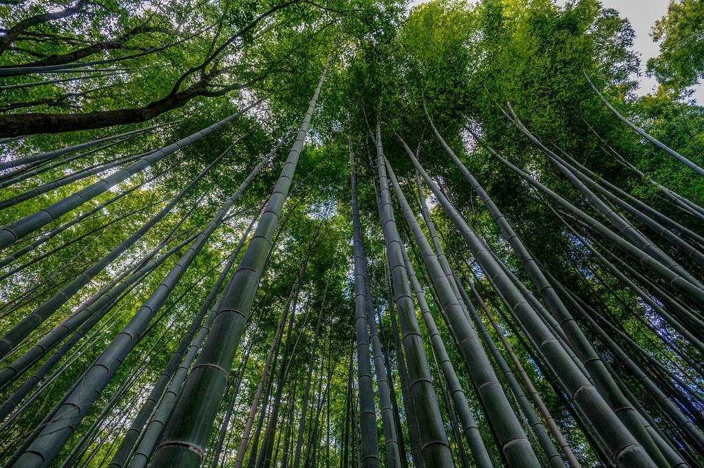 bamboo10.jpg