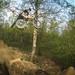bmx-trails / MT Trails by Ruben501