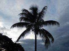 Symbol of the Tropics