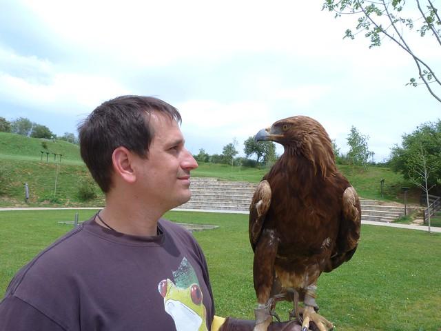 Mirando un águila real en Cabárceno