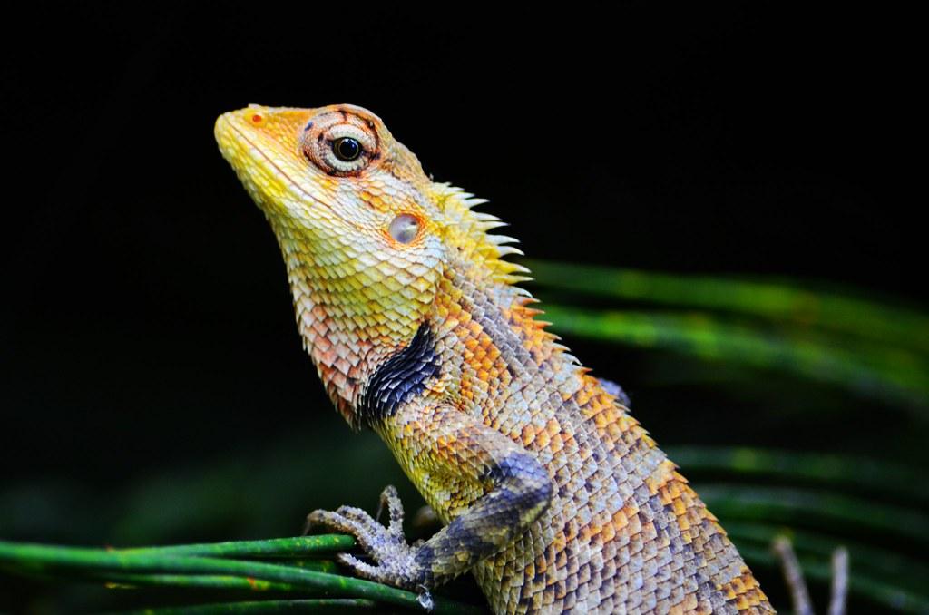 Lizard | Nima Khosravi