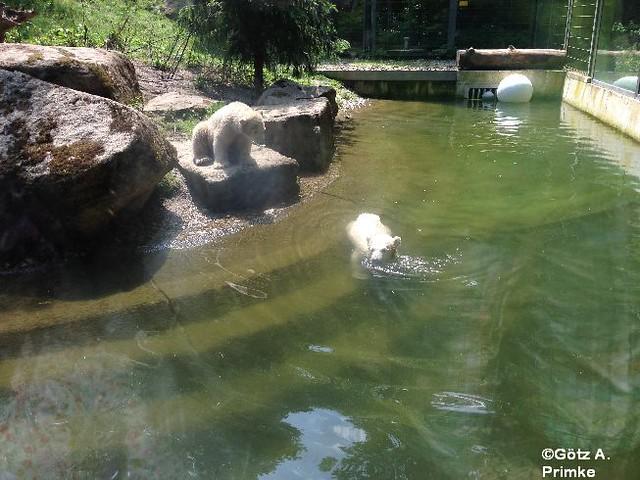 Muenchen_Tierpark_Hellabrunn_Juni_2014_007