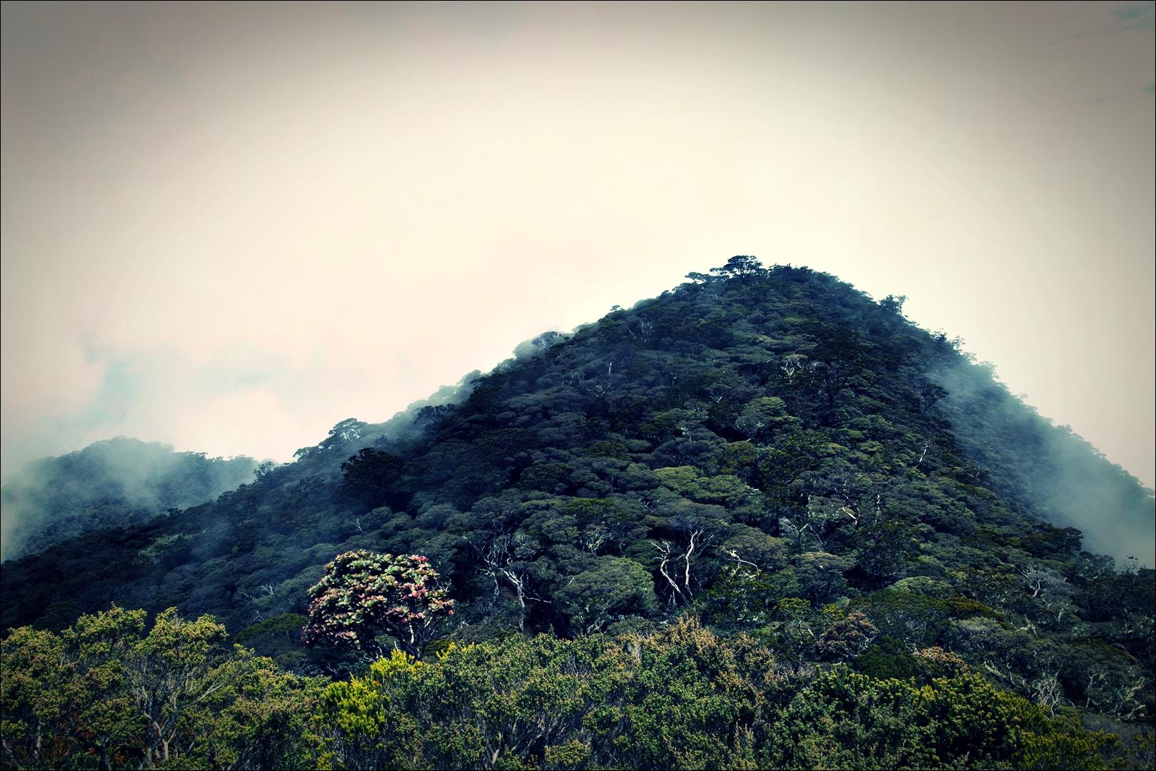 안개낀 산-'키나발루 산 등정 Climbing mount Kinabalu Low's peak the summit'
