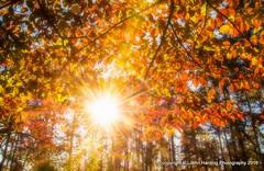 A Blast of Autumn