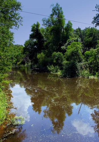 lake creek louisiana bayou swamp wetlands cypress marsh crosslake shreveport