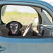 Dog is my Co-Pilot by wendy74ca