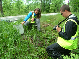 Keene State College conservation interns document a roadkilled porcupine as part of a wildlife road mortality survey. (photo: Bill Fleeger)