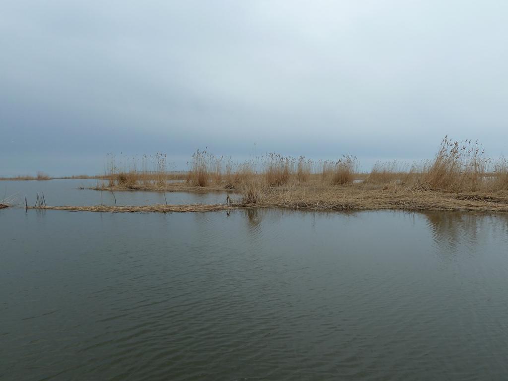 Marismas y pantanos del Volga en su desembocadura. Astracán. Autor, Vladislav.bezrukov