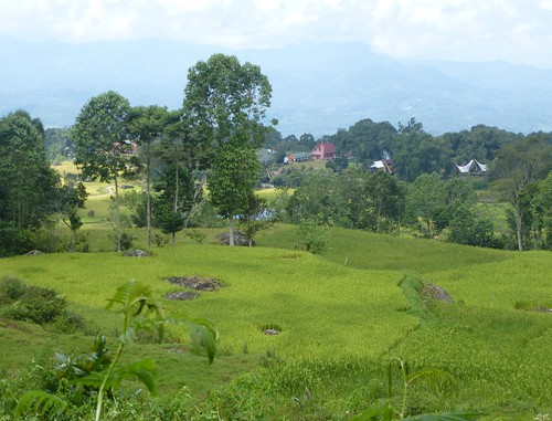 Sulawesi13-Lo'ko Mata-Ke'pa (5)