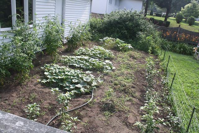 garden mid-summer