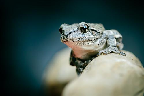 2013 07 31 Frog 214.jpg