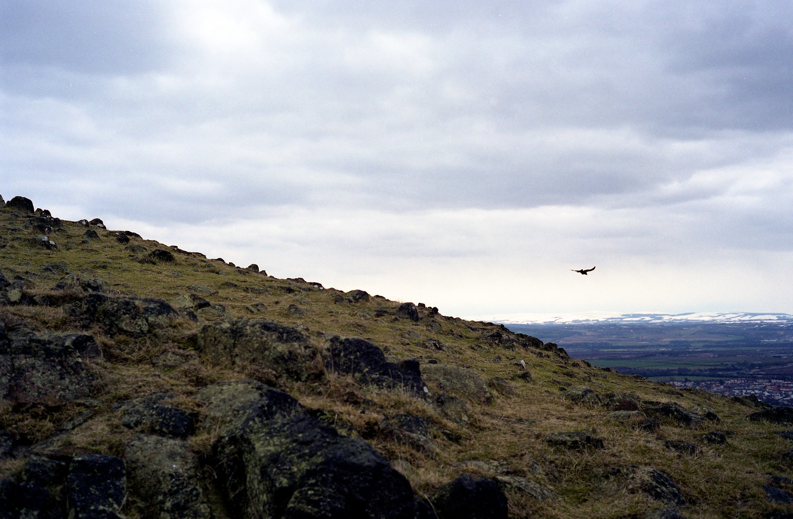 "Image titled ""Bird, Descending Arthur's Seat, Edinburgh."""