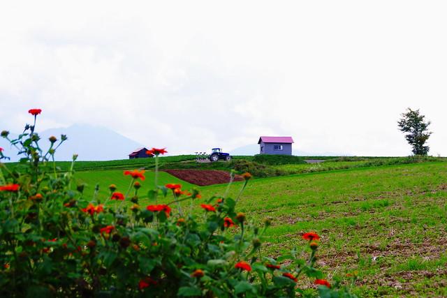 花風景のある二つの小屋