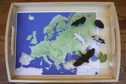 Animals of Europe Tray