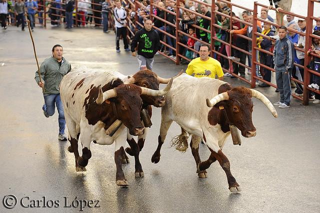 San Miguel 097