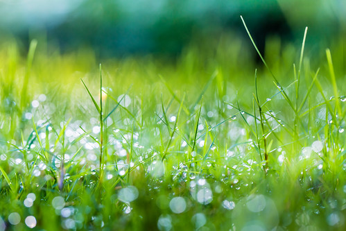 morning autumn urban color macro green fall grass horizontal canon dof bokeh taiwan nopeople 100mm dew taipei 秋天 微距 晨曦 capitalcity flickrfriday 朝露 attheroadside canoneos5dmarkiii canon5dmarkiii