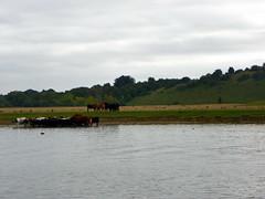 Wooburn Green-Little Marlow 061: River Thames