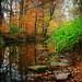 Sultry Autumn Scene