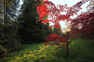 Blood /of/ Maple spills into October sunset