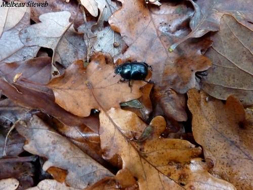 Dans la forêt Durocasse