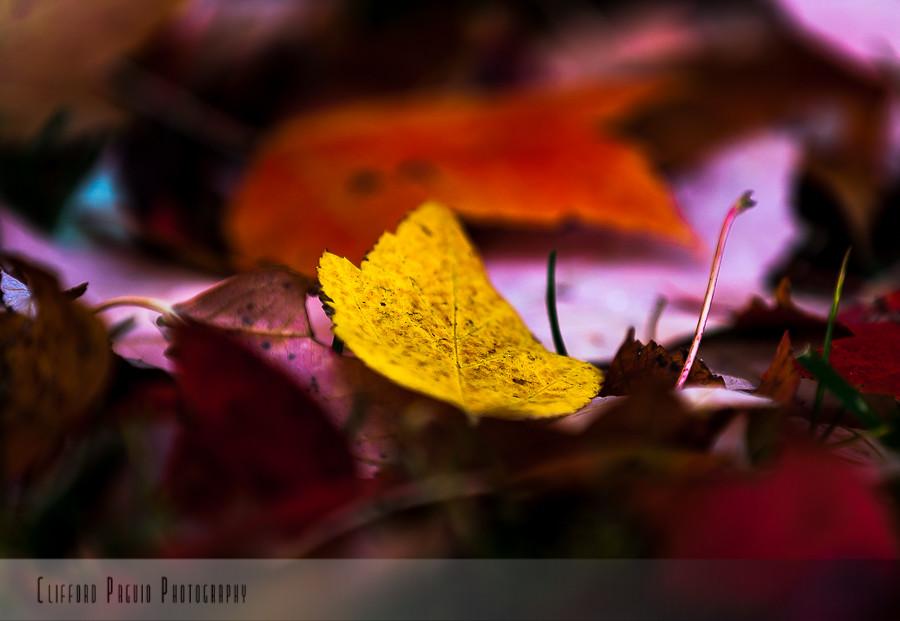 IMAGE: http://farm6.staticflickr.com/5499/10737324364_72f55b2ffa_b.jpg