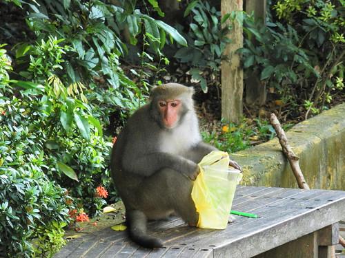 到壽山千萬不要以塑膠袋裝食物,以免台灣獼猴搶食。(圖片來源:壽山國家自然公園管理處)