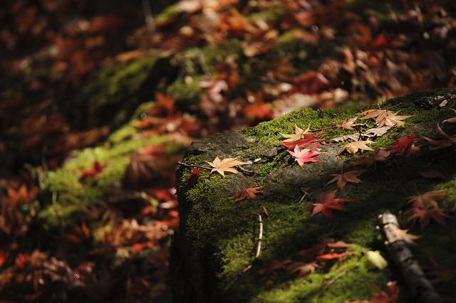 地表も秋盛り
