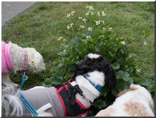 Smelling-da-Flowers