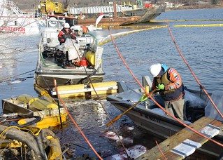LECLAIRE, IA. - Cleanup crews work to collect fuel spilled from the towing vessel Stephen L. Colby, Nov. 29 2013, along the shoreline of the Mississippi River. The Unified Command is working in conjunction with community volunteers to ensure all pollution is cleaned up and the environment restored to its original state after the vessel struck an unidentified submerged object, Nov. 25, 2013, and partially sank. U.S. Coast Guard photo by Petty Officer 1st Class Mariana O'Leary