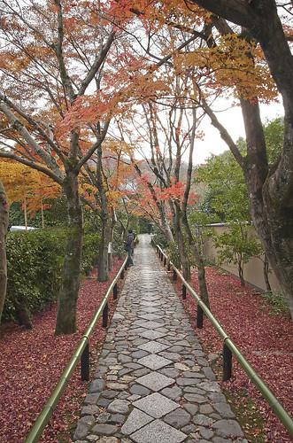 【写真】2013 紅葉 : 光悦寺/2013-12-02/IMGP4432