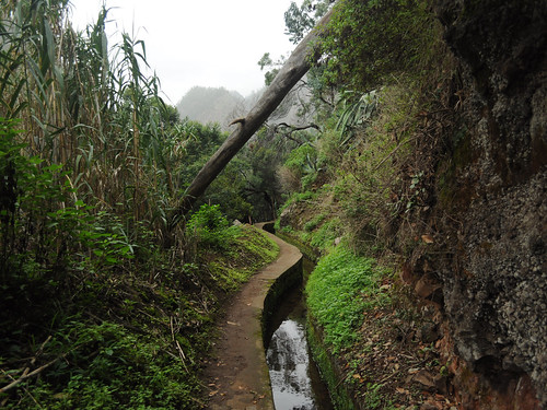 Levada do Curral