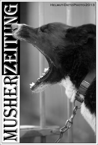 Dog Personalities: Alaskan Huskys