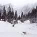 Rocky Mountain Snowstorm by AlexBurke