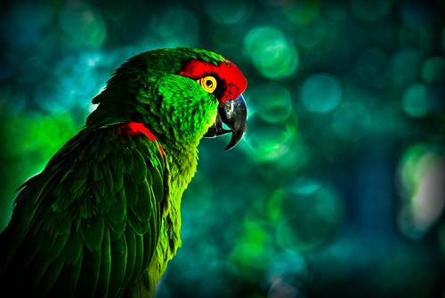 Green Parrot - [Explored]