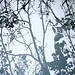 Soft Furnsihings Fabrics Bracken Leaves