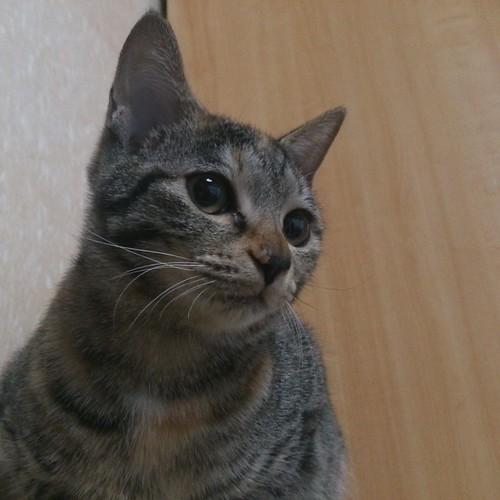 良く言えばファニーフェイスだったカトルがだんだんと普通に可愛い顔になってきた by Chinobu