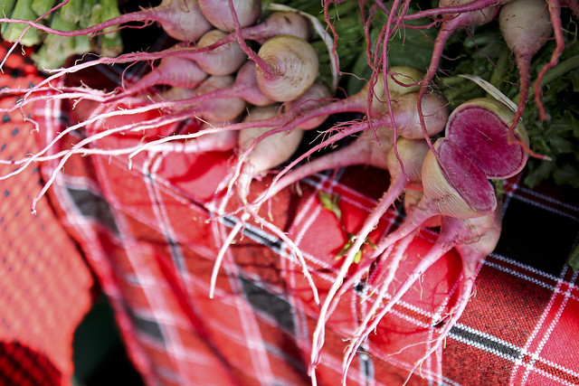 gorgeous radishes