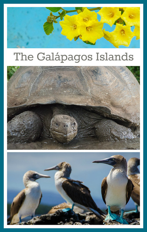 Photographic Tour of the Galapagos