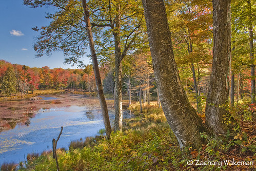 autumn nature forest landscapes pond fallcolors adirondacks upstateny beaver fallfoliage northern tughill centralny sceniclandscapes