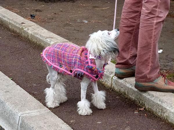 petit chien rose