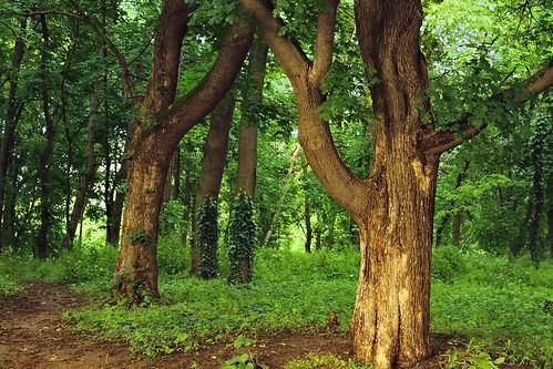 europa tripod romania bucuresti herastrau copaci vegetatie muntenia