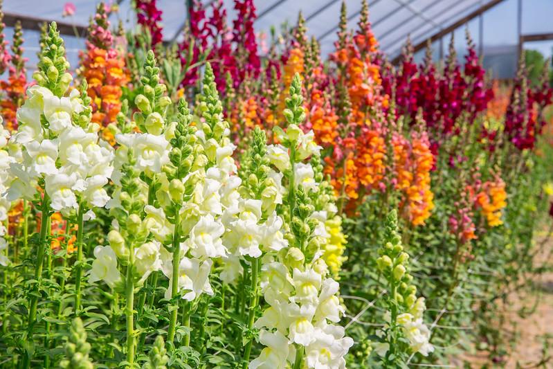 Greenstone Fields - Flowers