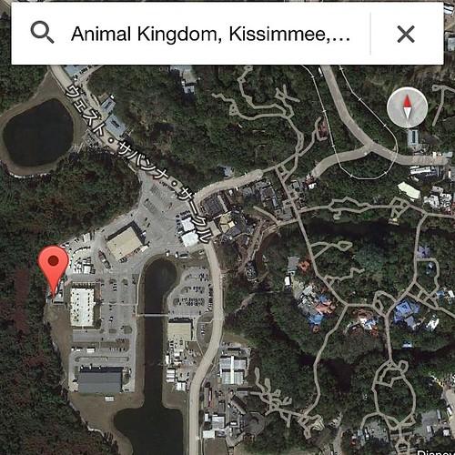今回のツアーでひときわ興味深かったもの。ディズニー・アニマルキングダムのバックステージ、ピンをドロップした位置にビックリするくらい高い木の作り物がある。あまりの巨大さにアバターエリア関連の先行設置?と思って聞いてみたら…答えは http://dpost.jp/ でそのうち。