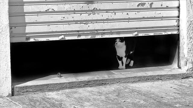 Black and White Life / A vida em preto e branco
