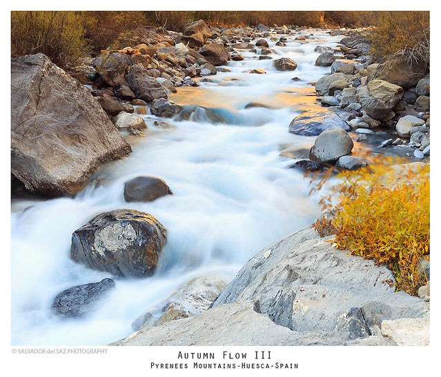 Autumn Flow III